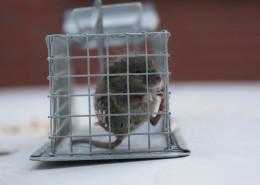 Mysz31 260x185 myszy