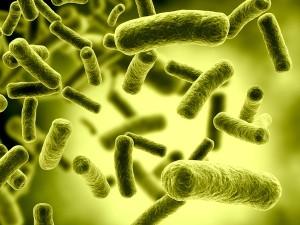 bakteria2 300x225 Odgrzybianie mieszkań