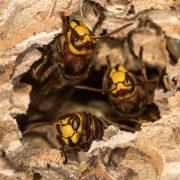 metody walki z owadami